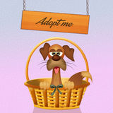 Adopt a dog Royalty Free Stock Images