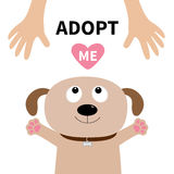 Adopt me. Dog face. Pet adoption. Puppy pooch looking up to human hand. Paw print hug. Flat design. Help homeless animal concept. Cute cartoon character. White Stock Images