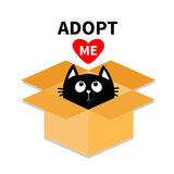 Adopt me. Dont buy. Cat inside opened cardboard package box. Pet adoption. Kitten looking up to red heart. Flat design style. Help Stock Photos