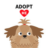 Adopt me. Dont buy. Shih Tzu Dog head inside opened cardboard package box. Pet adoption. Puppy pooch red heart. Flat design. Help. Homeless animal concept Royalty Free Stock Image