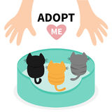 Adopt me. Kittens looking up to human hand. Cat bed. Animal hug. Cute cartoon funny character. Helping hands concept. Pink heart. Stock Images
