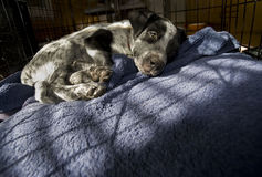 Adopt This Puppy. Stock Images
