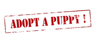 Adopt a puppy. Rubber stamp with text adopt a puppy inside, vector illustration Stock Photo