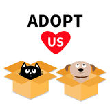 Adopt us. Dont buy. Dog Cat inside opened cardboard package box. Pet adoption. Puppy pooch kitten cat looking up to red heart. Fla Royalty Free Stock Photos