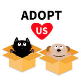Adopt us. Dont buy. Dog Cat inside opened cardboard package box. Ready for a hug. Puppy pooch kitten cat looking up to pink heart. Royalty Free Stock Photography