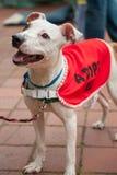 Adoptable hund Fotografering för Bildbyråer