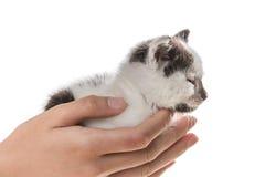 Adopte un pequeño gatito Imagen de archivo libre de regalías