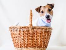Adopte un perro Fotografía de archivo libre de regalías