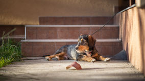 Adopted dog Royalty Free Stock Photos