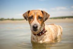 Adopted mischte Zuchthund im Urlaub Stockfotos
