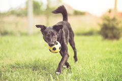 Adopted mixed breed dog playing Stock Photo