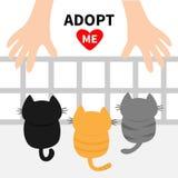 Adoptera mig Tre kattungar som upp till ser den mänskliga handen Barnkammareburaviarium Roligt tecken för gullig tecknad film Dju Royaltyfria Foton