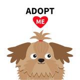 Adoptez-moi N'achetez pas Boîte de paquet de carton ouverte par intérieur de tête de Shih Tzu Dog Adoption d'animal familier Coeu Image libre de droits