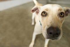 Adoption de chien d'abri Image stock