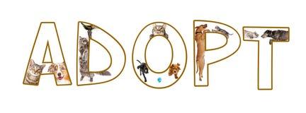 Adoptuje zwierzę domowe Śmiesznego tekst obraz stock