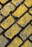 Adoquín amarillo, Fotografía de archivo libre de regalías