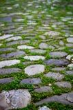 Adoquines con el musgo en un pavimento Fotografía de archivo