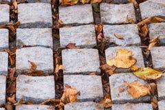 Adoquines de piedra ásperos cubiertos con las hojas muertas Foto de archivo