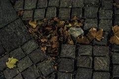 Adoquines y hojas muertas en la noche Foto de archivo libre de regalías