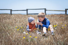 Adorabe little brothers playing with wild flowers royalty free stock images