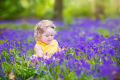 Adorabe toddler girl in bluebell flowers in spring Royalty Free Stock Image
