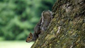 Adorable, Animal, Autumn Royalty Free Stock Photos