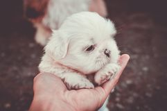Adorable, Animal, Blur, Canine royalty free stock photography