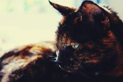 Adorable, Animal, Blur, Cat Stock Photo