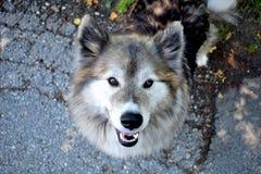 Adorable, Animal, Breed Stock Photos