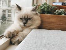 Adorable, Animal, Cat Royalty Free Stock Photos