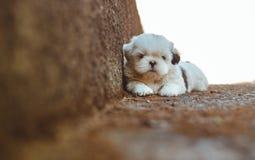 Adorable, Animal, Close-up royalty free stock photos