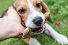 Adorable, Animal, Photography Stock Images