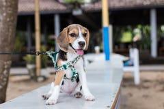 Adorable, Animal, Photography Stock Photography