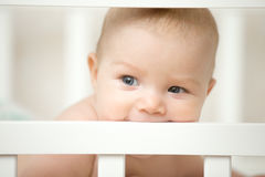 Adorable baby biting the board of his wooden cot Stock Images