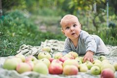 Adorable baby boy eating apple playing in the garden . Child having fun on family picnic in summer garden. Kids eat fruit. Healthy royalty free stock photos