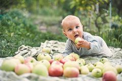 Adorable baby boy eating apple playing in the garden . Child having fun on family picnic in summer garden. Kids eat fruit. Healthy stock photography