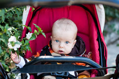 Adorable baby boy  in a stroller Royalty Free Stock Photography