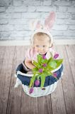 Adorable baby bunny. With purple flowers Stock Images
