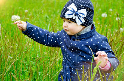 Adorable baby with dandelion Stock Image