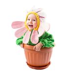 Adorable baby girl , dressed in flower costume on white background Royalty Free Stock Images