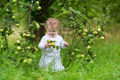 Adorable baby girl eating apples in the garden Stock Images
