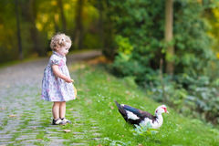 Adorable baby girl in festive dress with wild duck. Adorable baby girl in a festive dress playing with a wild duck stock photo