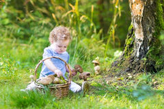 Adorable baby girl gathering mushrooms in a big basket Stock Photos