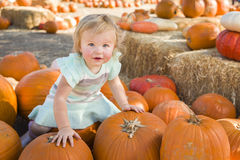 Adorable Baby Girl Holding a Pumpkin at the Pumpkin Patch Royalty Free Stock Image