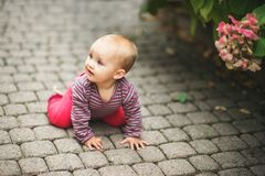 Adorable baby girl playing outside. Adorable baby girl of 9-12 months old playing outside in the park Royalty Free Stock Photo