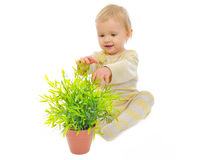 Adorable baby girl playing with plant in pot Stock Photography