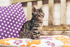 Adorable baby grey tabby kitten on a garden bench Royalty Free Stock Photography