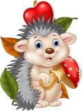 Adorable baby hedgehog holding mushroom Stock Image