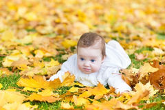Adorable baby in park with yellow autumn leaves Stock Photo