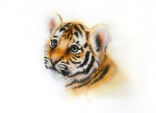 Adorable baby tiger head looking up on white background. Beautiful airbrush painting of an adorable baby tiger head looking up, on abstract blurry background stock illustration